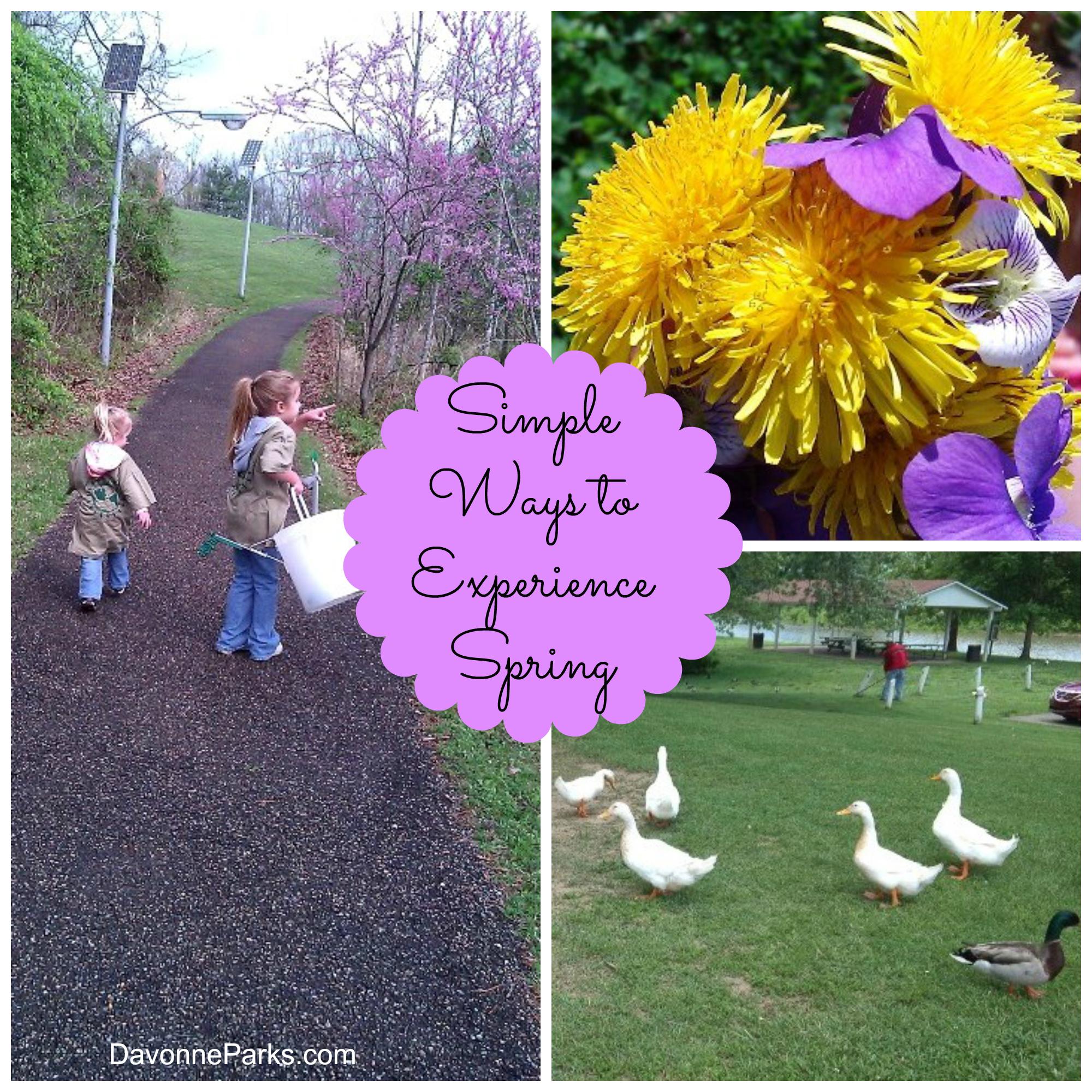 Simple Ways to Experience Spring